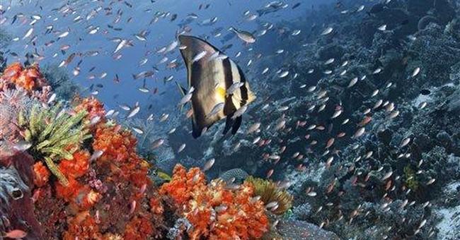 Fishermen blast premier dive sites off Indonesia