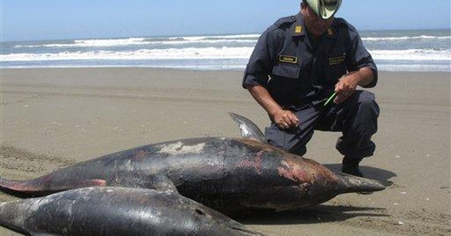Official: Dolphin deaths in Peru still a mystery