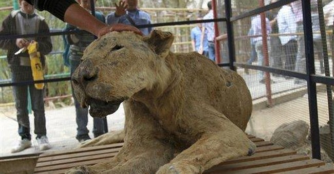 In Gaza zoo, stuffed animals join live ones