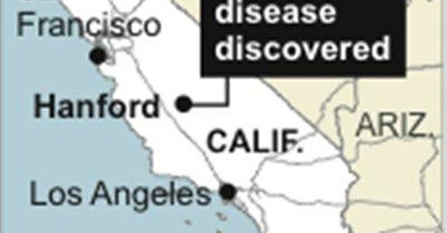 Of food supply risks, mad cow's not high on list