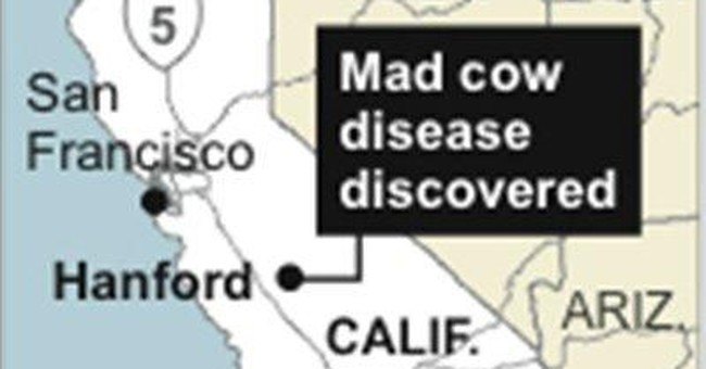 Holstein with mad cow disease was lame, lying down