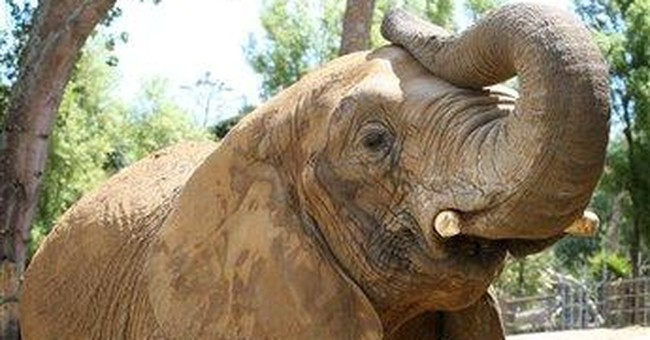 Zookeeper killed by elephant had sanctuary plans
