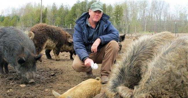 Ban on exotic swine causes backlash in Michigan
