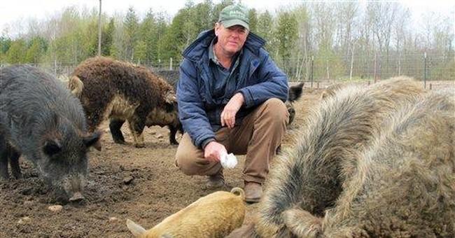 Ban on exotic swine causes backlash in Michigan