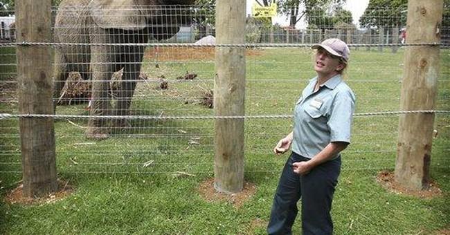 CA sanctuary says killer elephant still welcome