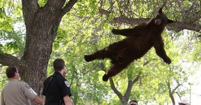 Bear wanders onto Colo. campus, moved to mountains