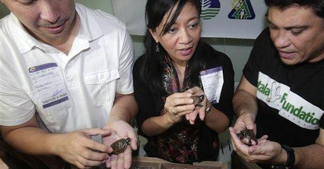 Rare Philippine turtles returned by Hong Kong