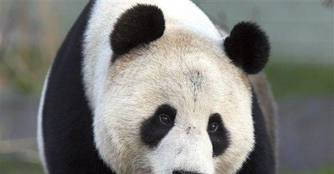 UK's recently arrived panda falls ill at zoo