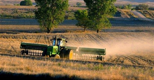 Wheat prices fall as winter wheat plantings rise