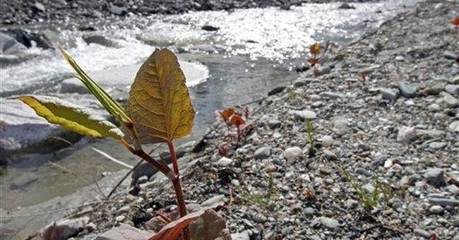 Flooding disperses invasive plant, fish species
