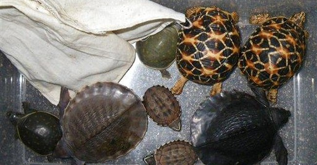 Man sentenced in LA in turtle smuggling case