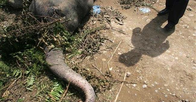 Sumatran elephant found poisoned in Indonesia