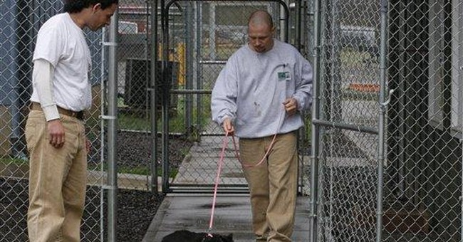 Bunking with cats, inmates learn value of teamwork