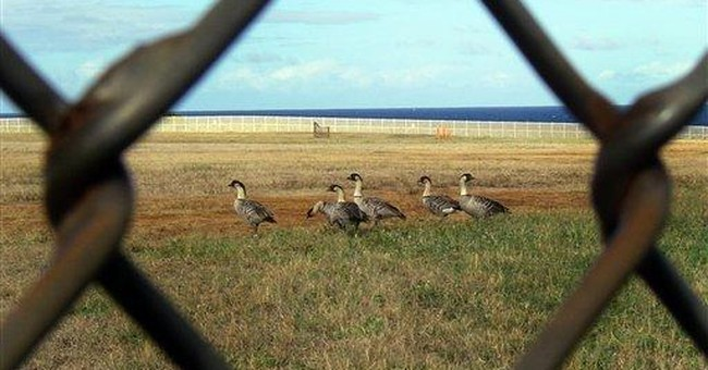 Endangered Hawaiian goose rebounds, now relocated