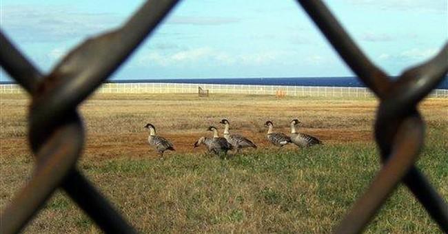 Endangered Hawaiian goose rebounds, now relocated