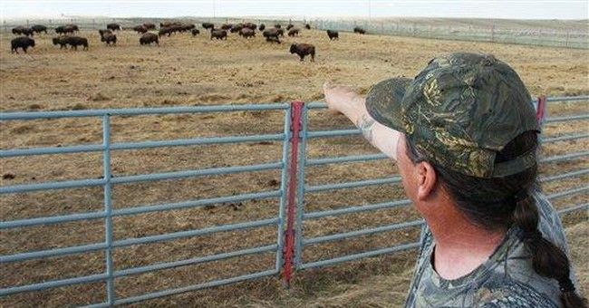 Montana judge blocks transfer of Yellowstone bison