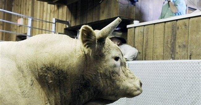 Cattle prices jump as ranchers begin rebuilding