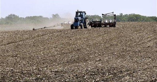 USDA predicts record US corn harvest this summer