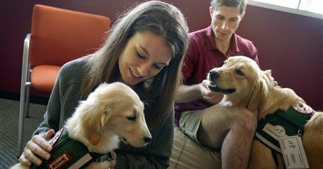 Colleges go to the dogs for stress busters
