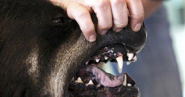 Leading insurer pays $109M for dog bite claims