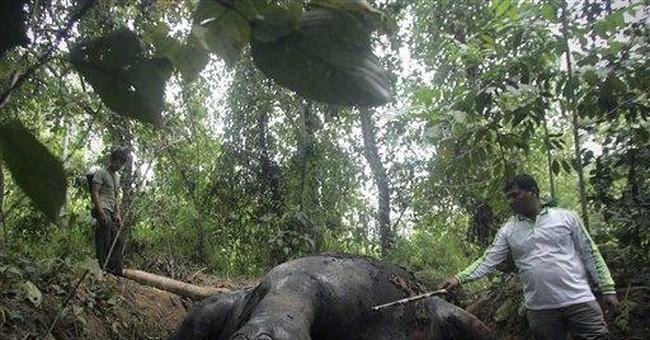 2nd Sumatran elephant found poisoned in Indonesia
