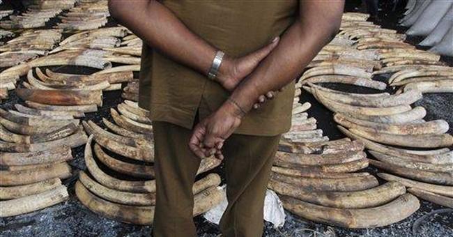 Sri Lanka customs seize 1.5 tons of elephant tusks