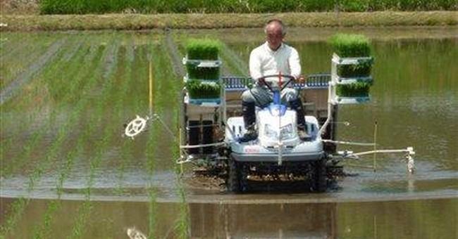 Japan farmers plant, pray for radiation-free rice