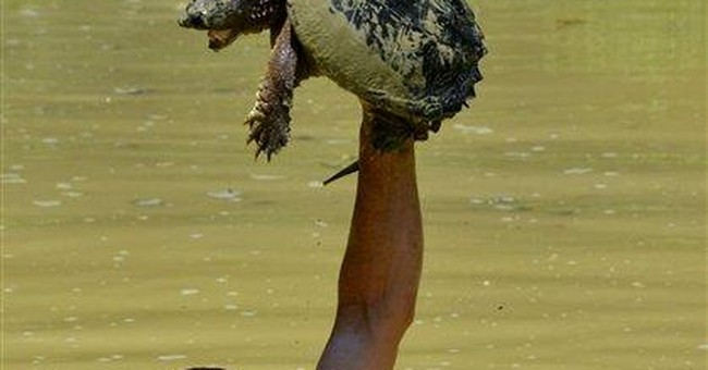 Kentucky man catches snapping turtles, TV audience