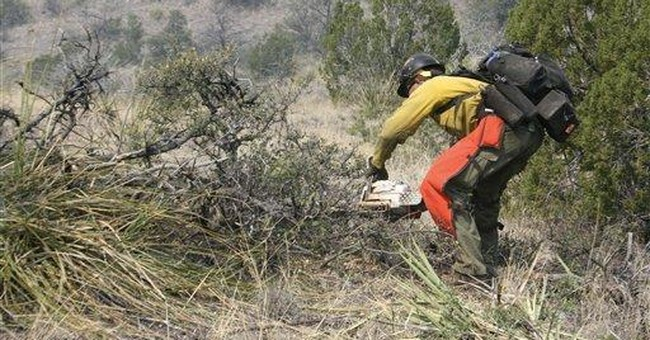 Record NM blaze studied for forest management