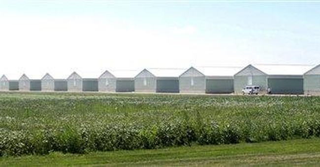 Lab: Iowa egg company warned of salmonella in hens