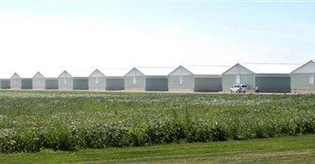 Lab: Iowa egg company warned of salmonella in hens