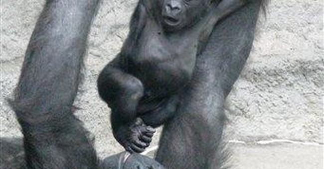 Baby gorilla dies at Pittsburgh zoo, cause unclear