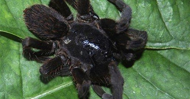 Biting spiders panic northeast India after 2 die