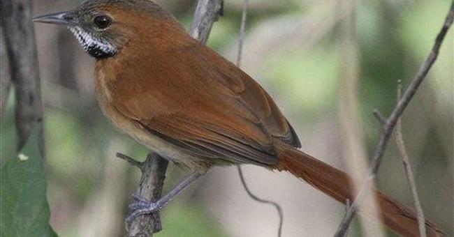 100 Amazon birds risk extinction, group says