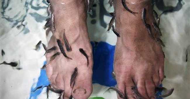 Fish pedicures: Baghdad's newest sign of progress?
