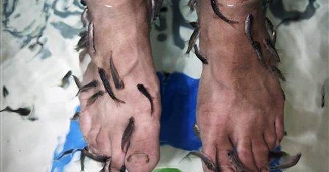 Fish pedicures: Baghdad's newest sign of progress?