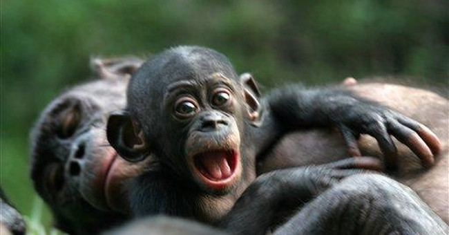 Scientists map DNA of bonobo, our peaceful ape kin