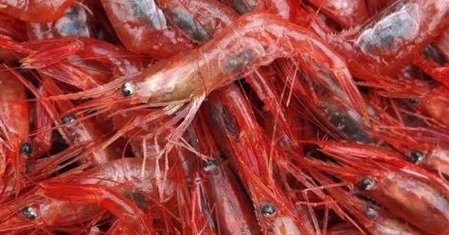 Shrimp season rolls on amid controversy over quota