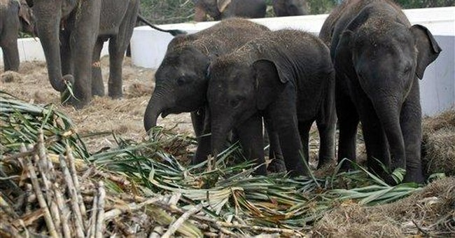 AP Exclusive: New taste for Thai elephant meat