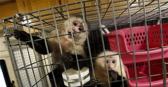 AP Enterprise: Monkey owners flee La. crackdown