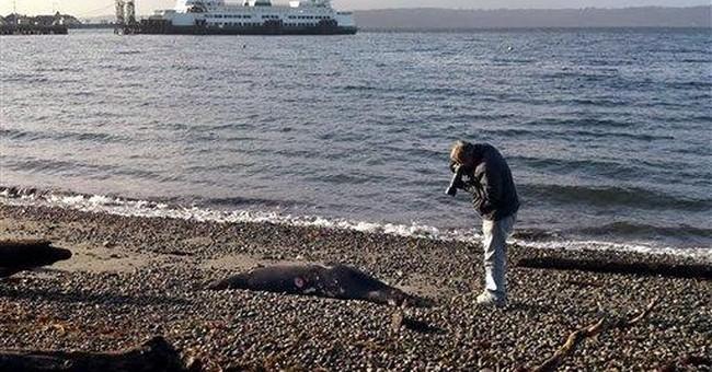 Reward for info about dead Puget Sound sea lions