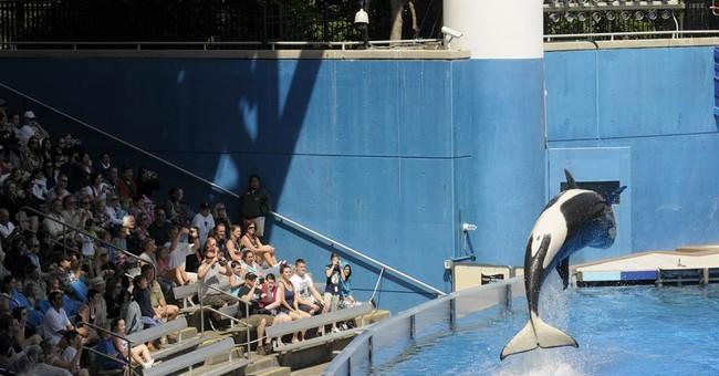 SeaWorld files to go public with $100 million IPO