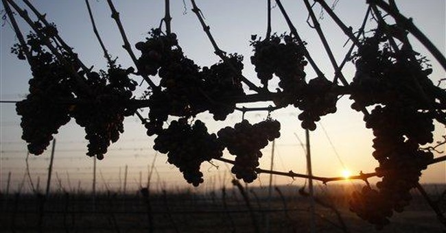 Arctic wave saves Czech ice wine production