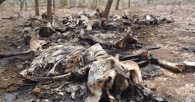 Activists: Poachers kill 200 elephants in Cameroon