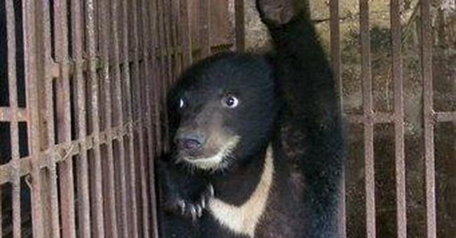 IPO plan for China bear bile company raises ire