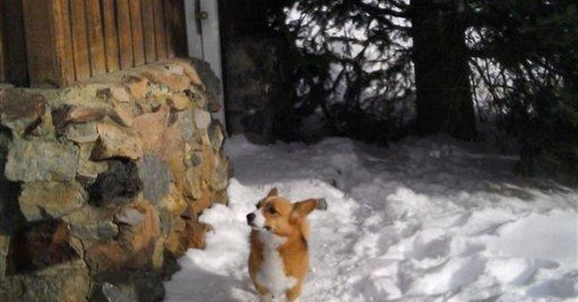 Dog found alive 4 days after Montana avalanche