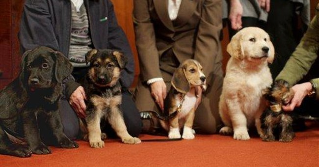 Kennel Club: Americans still love labs the most