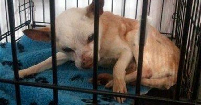 Noted NY animal hospice hit with cruelty charges