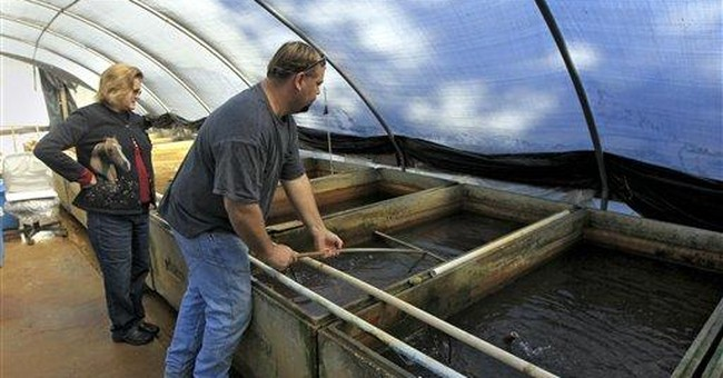 Winter a tough time for Fla. tropical fish farmers