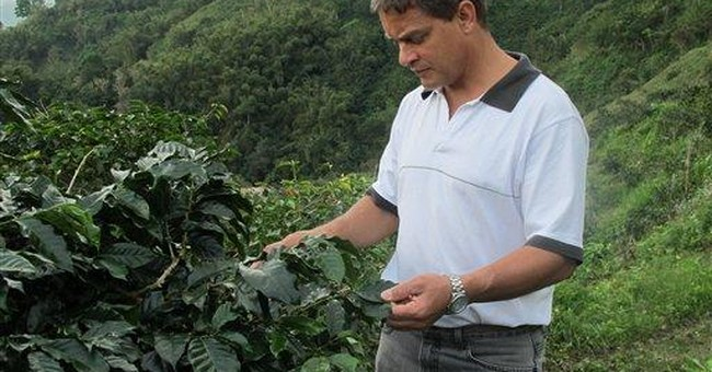 Jamaica's famed coffee industry facing hard times